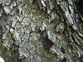 Tree Skin by AiSac