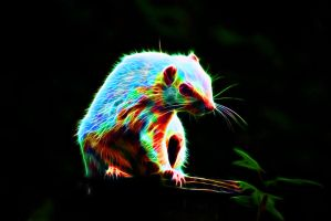 Colored Albino Rodent by megaossa