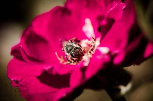 I love bees 2 by zooz898