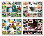 65% off for Calendars! by emmil