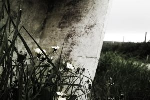 Weeds (4) by bollatay