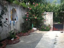 The front yard of a Mexican house by Crossing-Borders