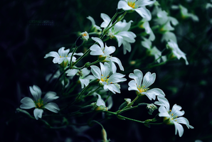 Dark flowers by Hersmallworld