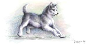 Malamute puppy by OmegaLioness