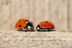 More Ladybugs by mindPlant