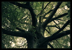 About Trees by Rustmouth