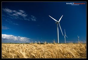 Windmills by Arnold-d