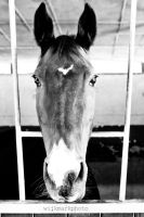 The horse that had Freedom tatooed on his forehead by DRIVINGYOU