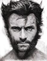 WOLVERINE by wulfwood04