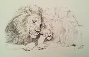 Lions =) by sophicardia