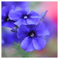 My Blue Heaven II by acutely