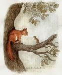 squirrel and mouse by moussee