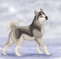 Snow Dog by outlaw-161