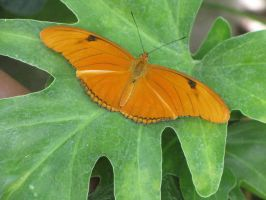 Butterfly 30 by needletail