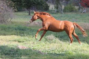 Chestnut Mare 17 by How-You-Remind-Me