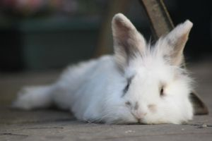 Chilled Rabbit by random-person101