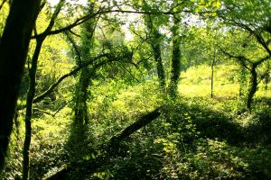 All green by The-Underwriter