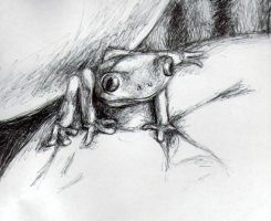 Frog by ambermariaalice