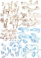 Life drawing - Animals by Tigerty