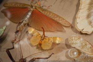 Butterflies : 12 by taeliac-stock