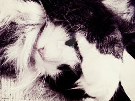 TRYING to sleep by lisajlangrish
