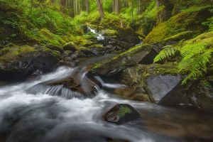 Sol Duc Valley - Olympic N.P by LukeAustin