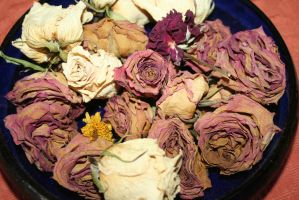 my dried roses by ingeline-art