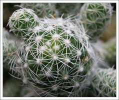 Little Cactus by comino69