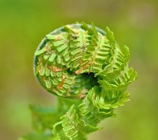 Fern by starykocur
