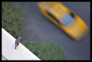 Hey Taxi, over here by GonBo