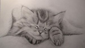 Cat Sketch by JHong098