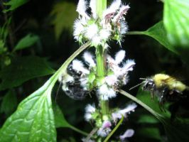 Bumble_and_Bee by EbolaBearSoda