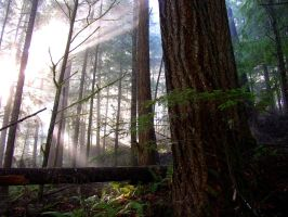 Rays in the Oregon woods by Glacierman54