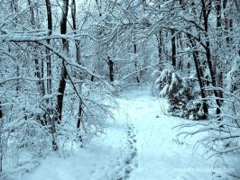 Winter In The Forest by Aivaseda
