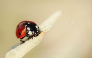 .: Ladybug :. by Friday-13th