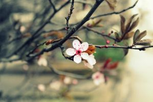 First signs of Spring by Harhailija