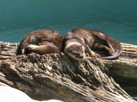 Sleepy Otters II by SquirrelOfChaos