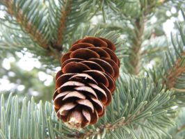 A closer look at the Pinecone by dananaboo