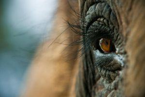 elephant's eye by yuriksdesign