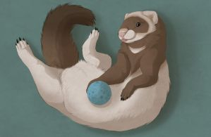 Silly Ferret by Kium