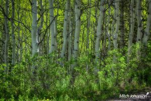 By the Trail HDR by mjohanson
