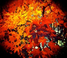 leaves 1 by flexter387