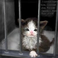 Caged Kitty by Amaranthia