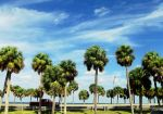 .:The Signature Tree of Florida:. by Shadouge4eva