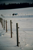 Fences by isabelle-19