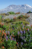 Volcano and Flowers by AFL