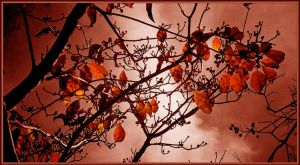 Fire Leaves by Tailgun2009