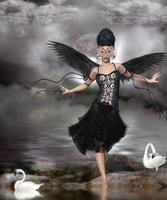 Waltz of the Black Swan by tinablanton