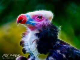 Vulture: Fractalius Re-Edit (Ver. 3) by nerdboy69