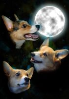 Corgi Moon by Cutter9792